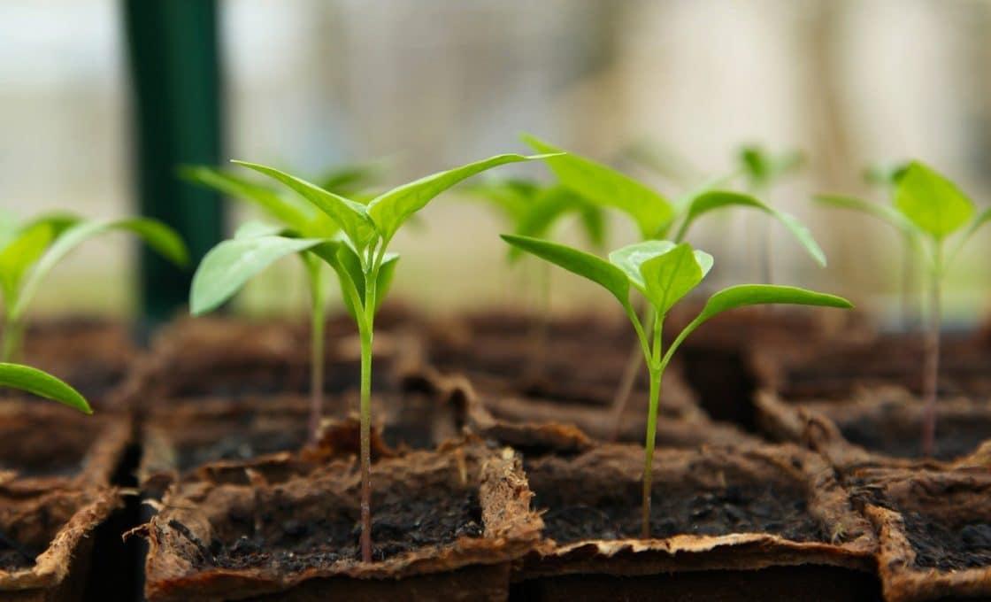 Pourquoi le choix du matériel est-il capital pour le jardinage ?
